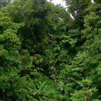 Green lush at Dominica