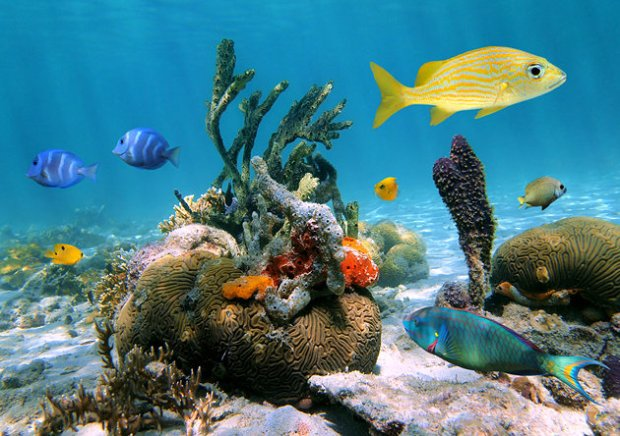 guadeloupe-jacques-cousteaus-underwater-reserve