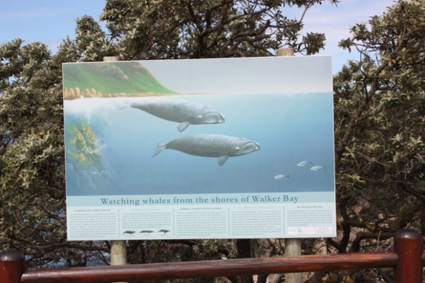 Whale information board