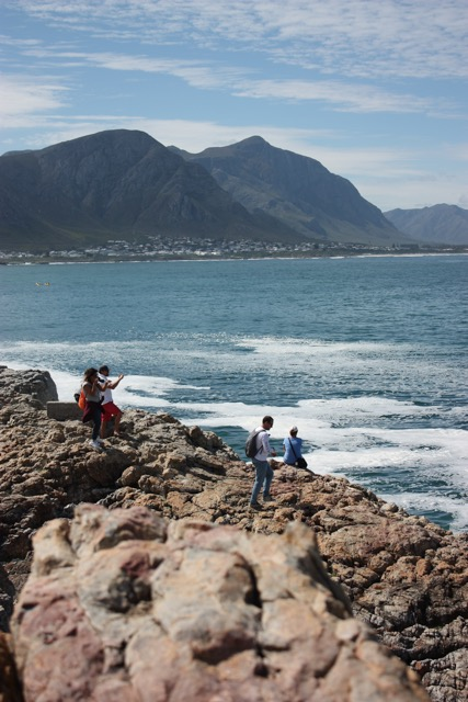 Whale watching from the shore of Hermanus